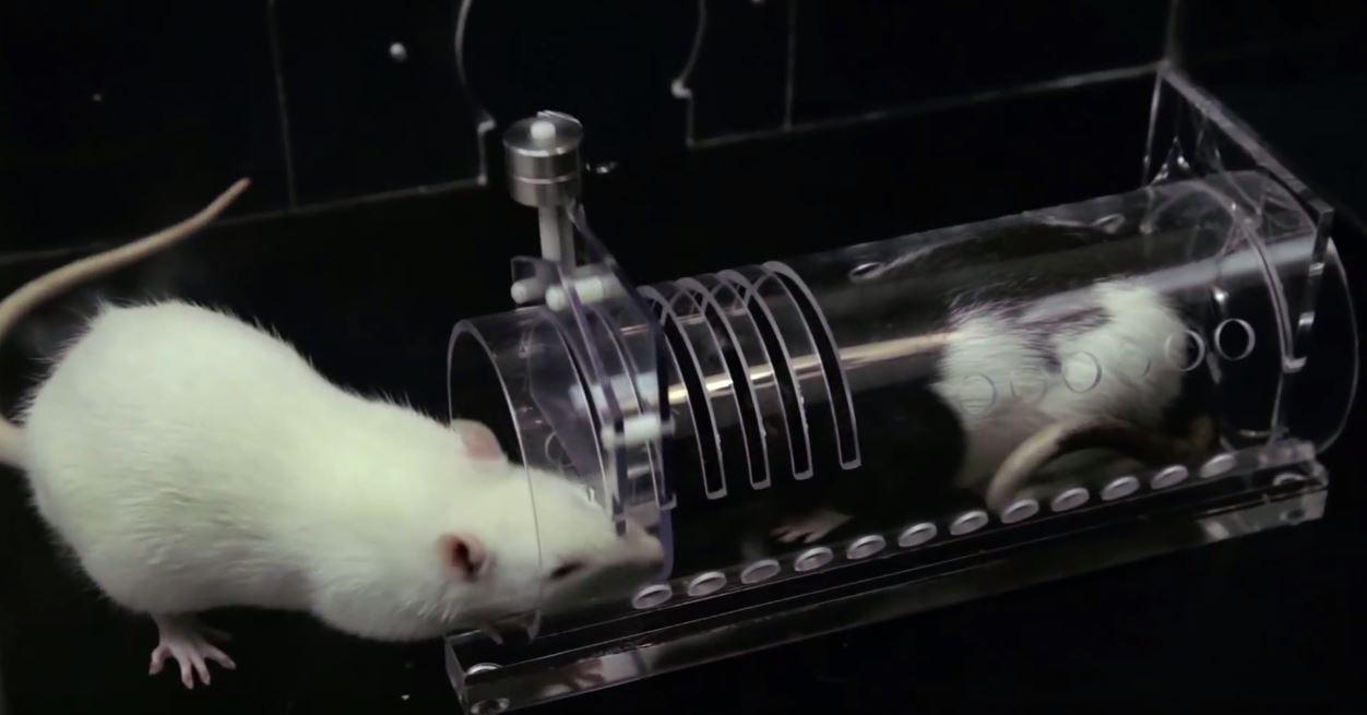 Do Rats Bite Human In Their Sleep